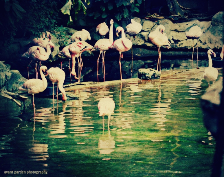 blog010613_flamingoes