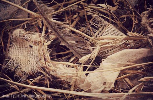 blog_012113_birdsnest