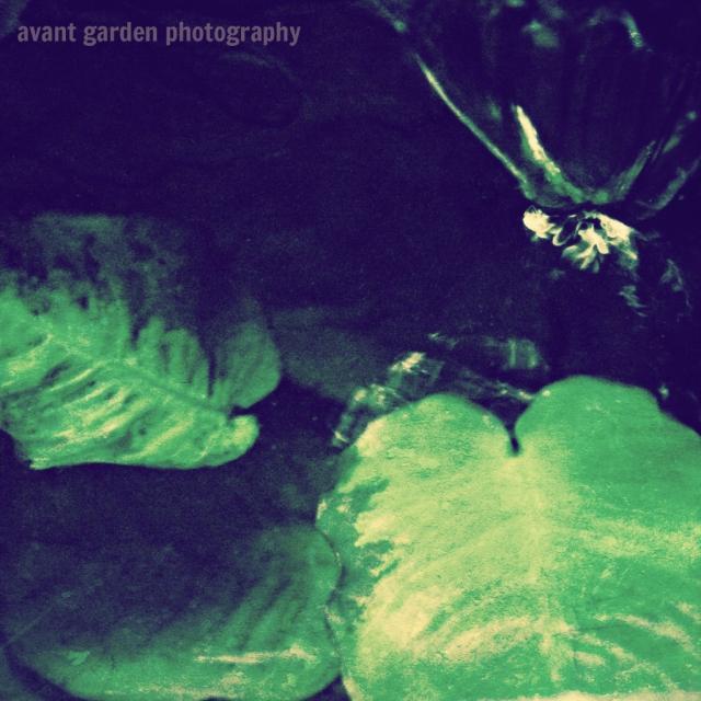 blog_012313_aquarium