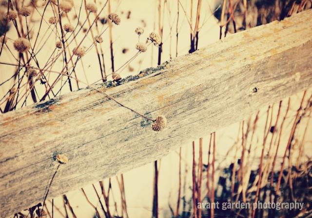blog_012413_prairie02