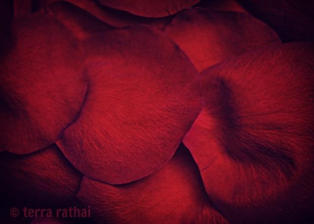 blog021413_rose petals
