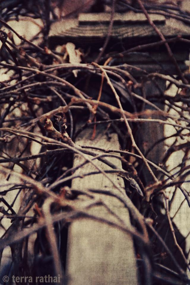 blog022813_winterivy