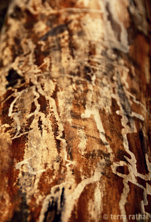 blog040913_patterns on a log