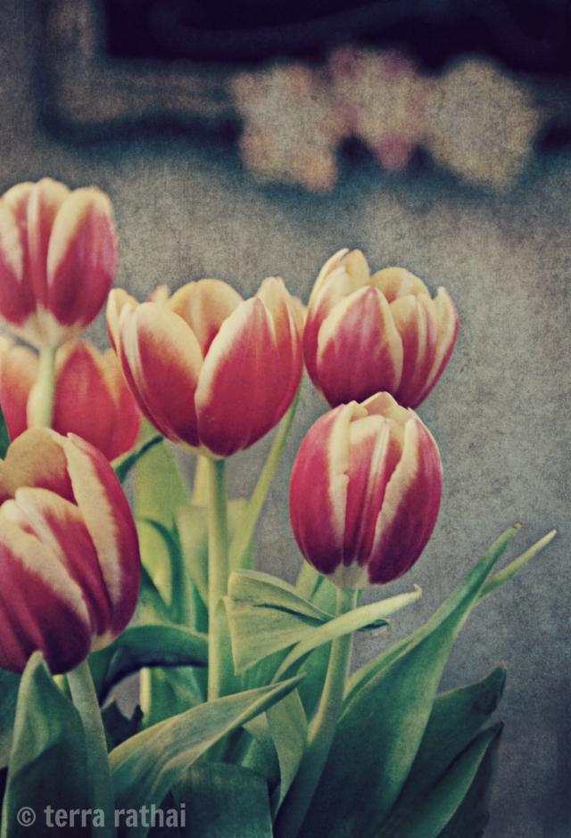 blog041513_tulips