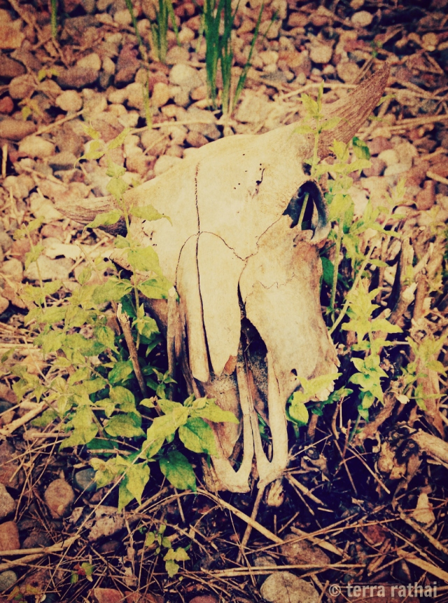 blog060913_skull & honeysuckle