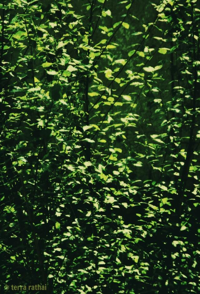 blog061113_baby birch