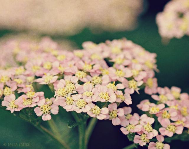 blog071013_pinkyarrow