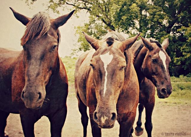 blog080313_lee's horses