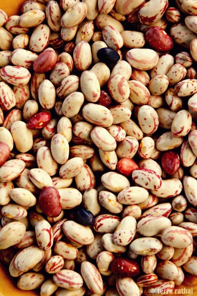 blog083013_shell beans