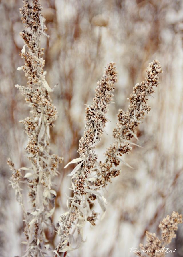 blog012015_seed stalks