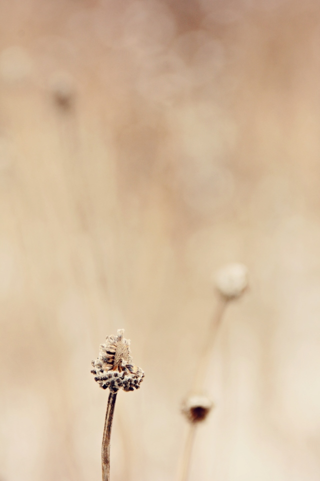 blog012115_broken seed head