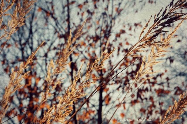 blog012115_grass&treetapestry