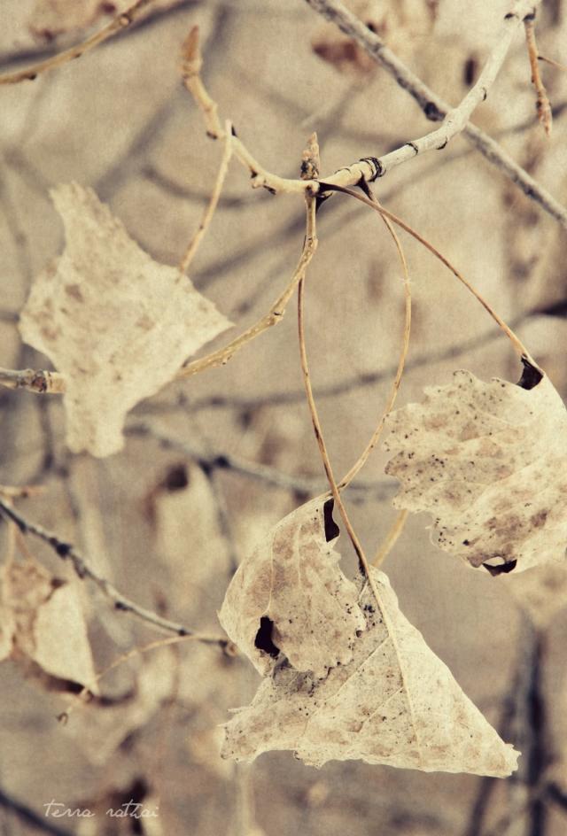 blog021715_leaves