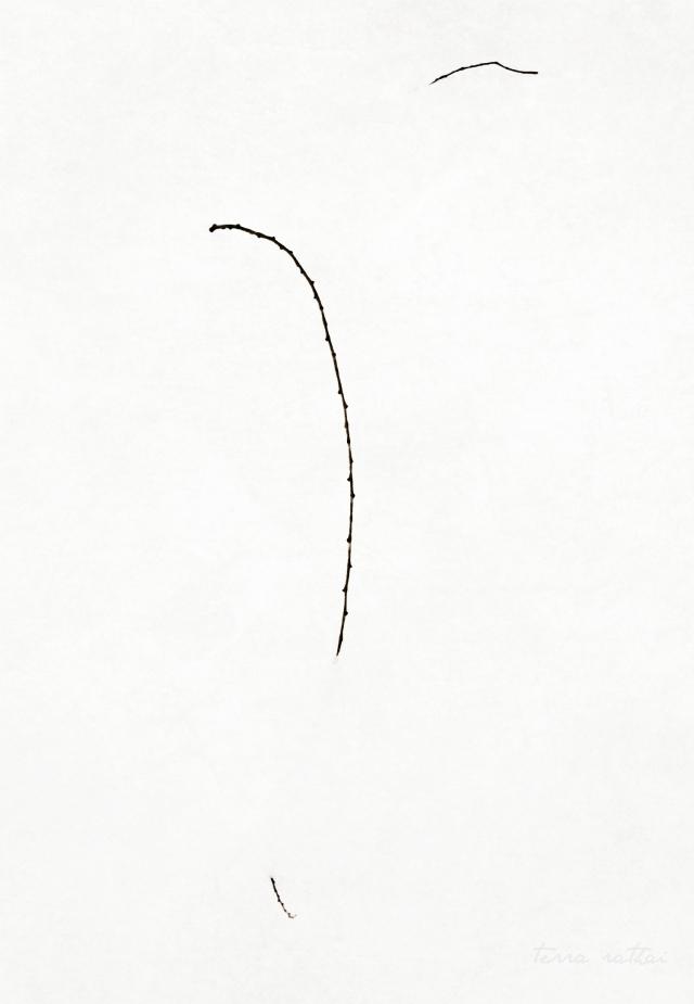blog022115_twigs