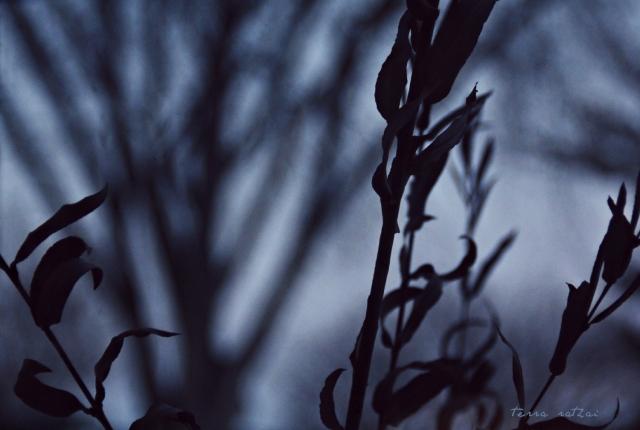 blog022215_dusk
