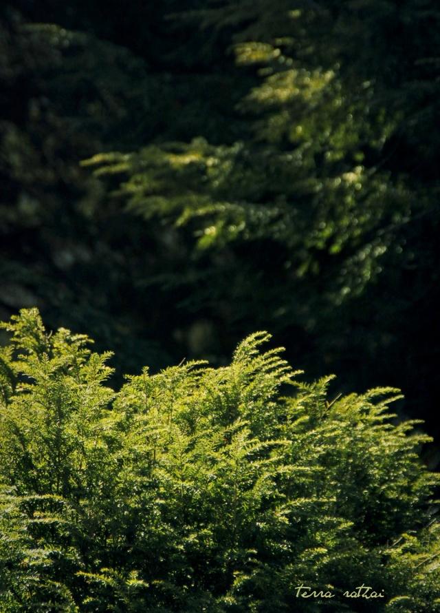 blog022815_sunlight on trees