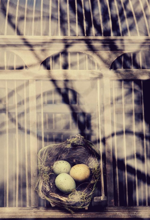 blog030915_birdsnestwithbranches&bars