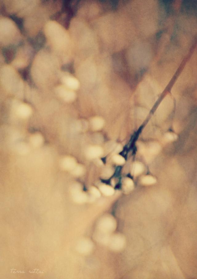 blog031215_prairie blur