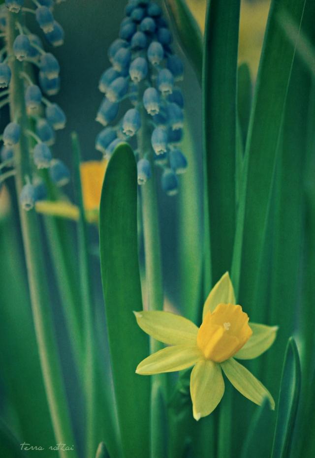blog031815_spring flowers