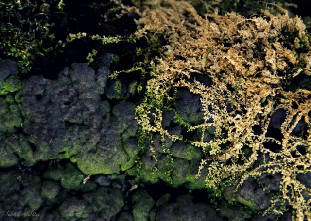 blog033115_fungus&moss