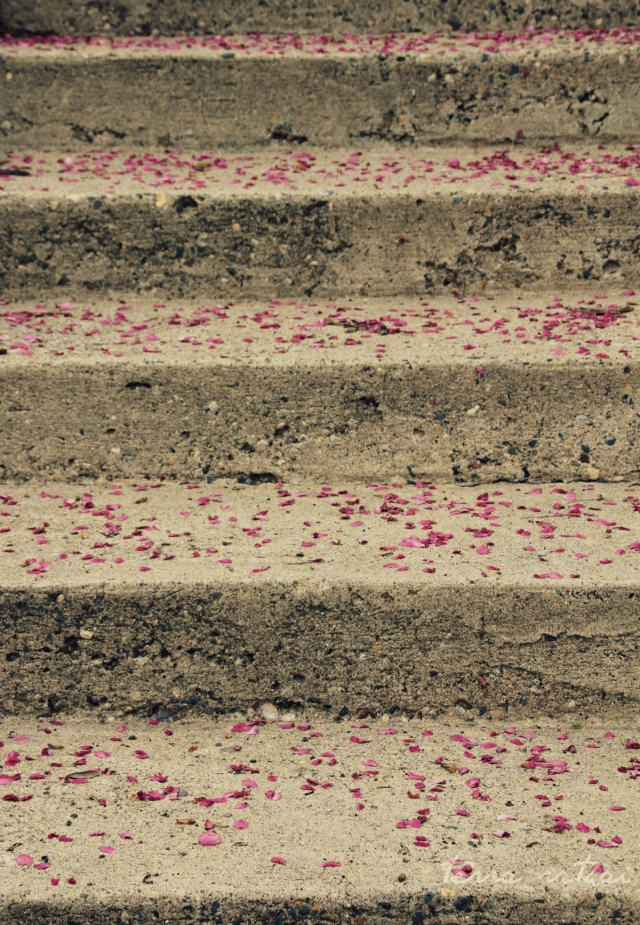 blog050915_petals on stairs