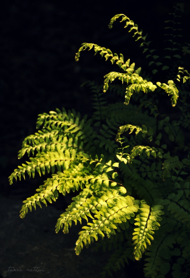 blog051415_ferns