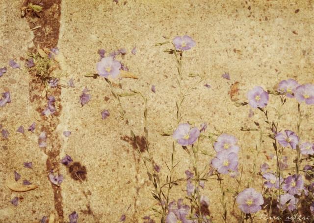 blog053115_cracks in the sidewalk with flowers