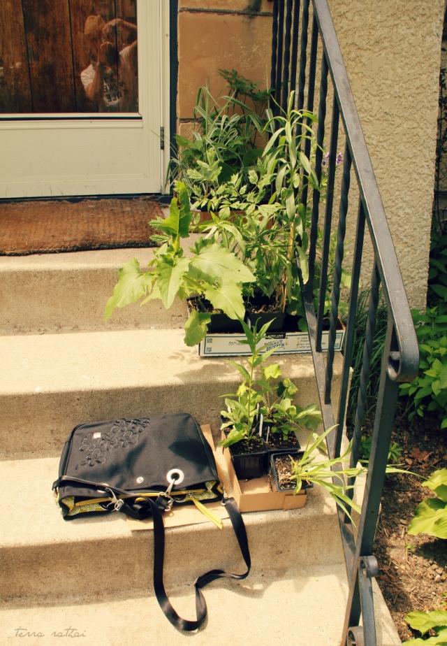 blog060715_self portrait purse & plants