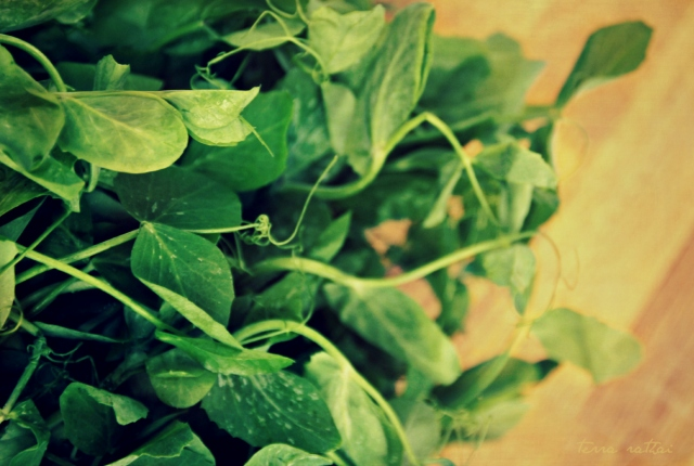 blog061215_pea-shoots