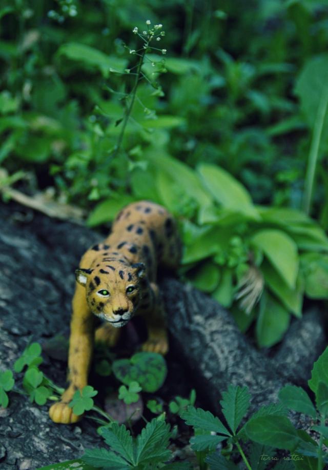 blog061615_cheetah