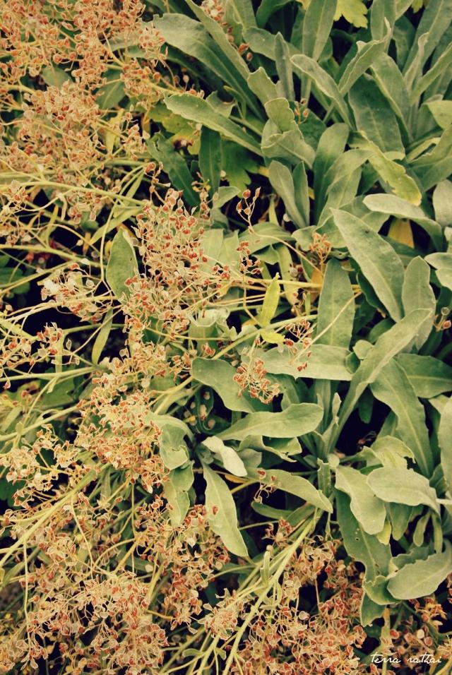 blog062315_mystery-plant