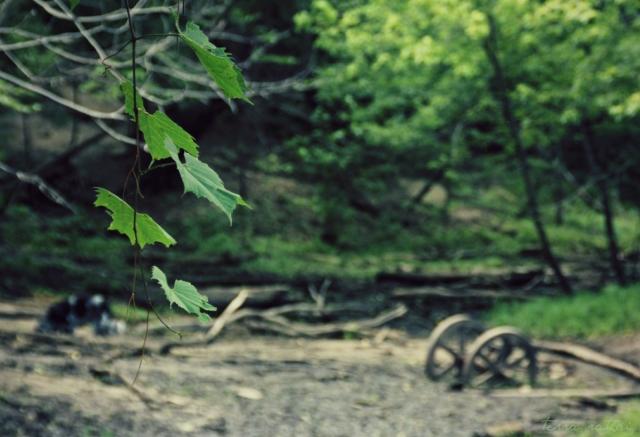 blog062615_wheels & vines