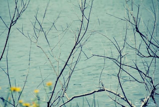 blog071515_branches&weeds@nokomis
