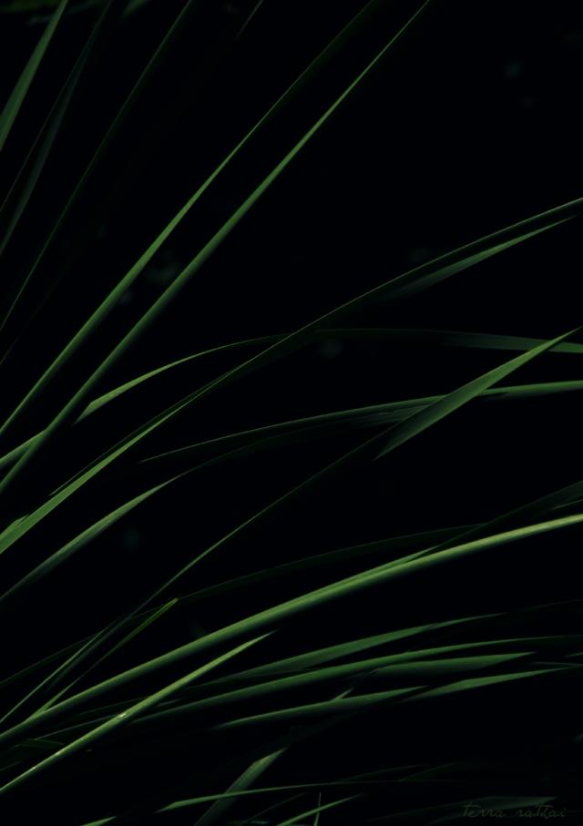 blog071815-green reeds bright sun