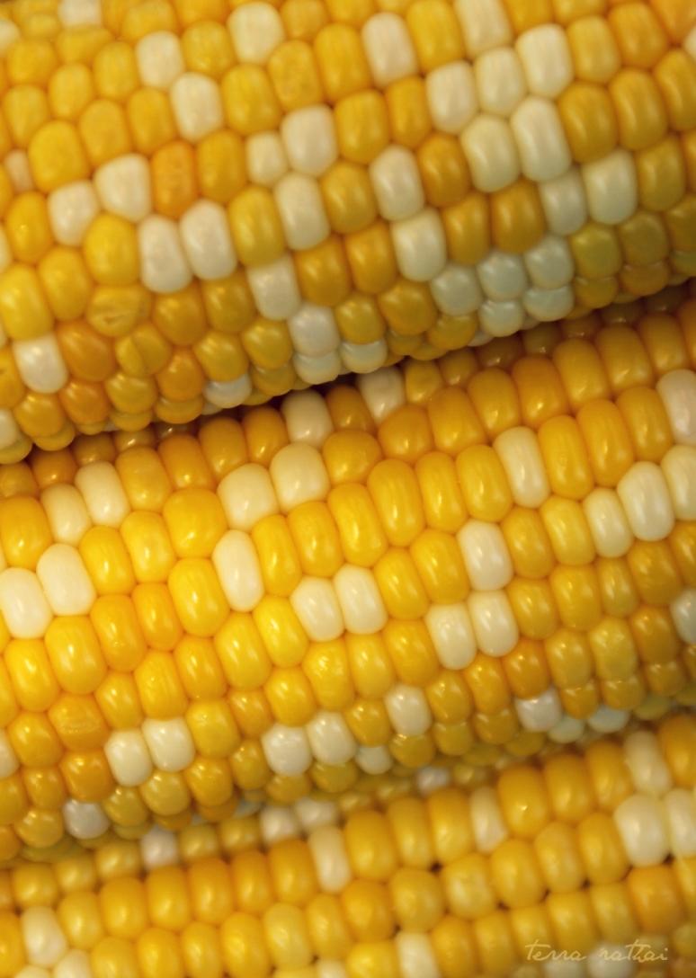 blog072415_sweet-corn