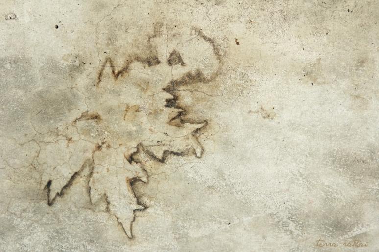 blog072615_maple leaf print on sidewalk