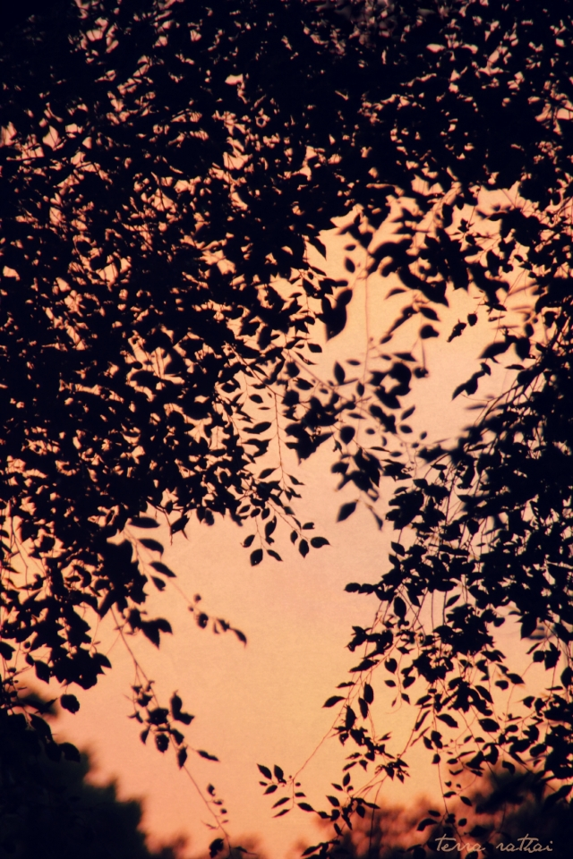 blog072615_peach-sunset