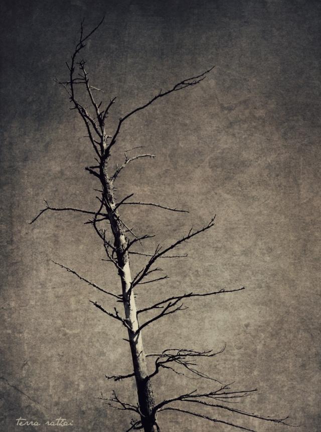 blog080215_dead-tree