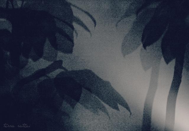 blog081915_shadows