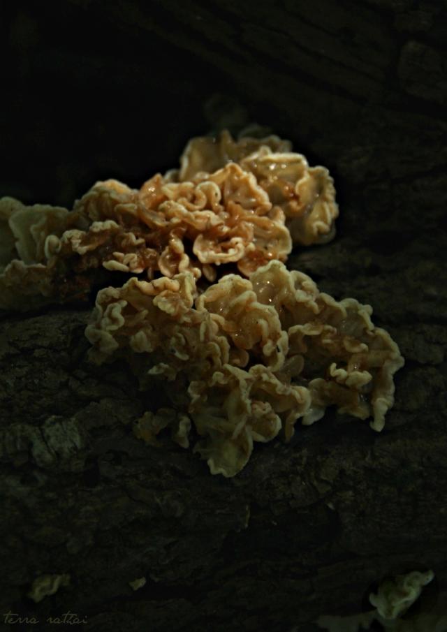 blog092715_fungus