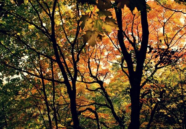 blog100915_autumn - top of the ridge