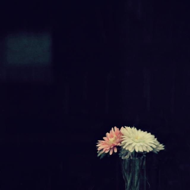 online012317_still-life-silk-daisies