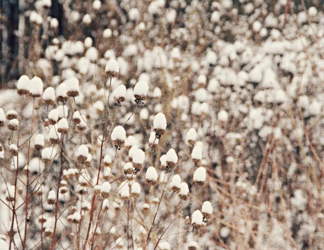 online012517_prairie-snow