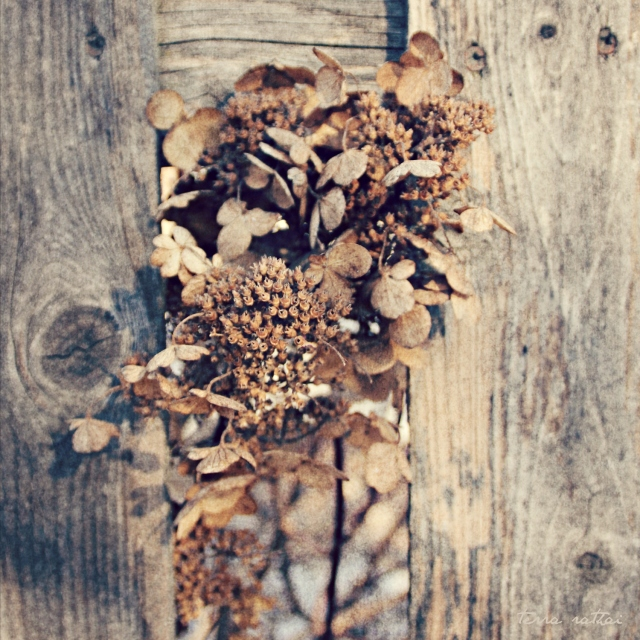online020517_dried-flowers-fence
