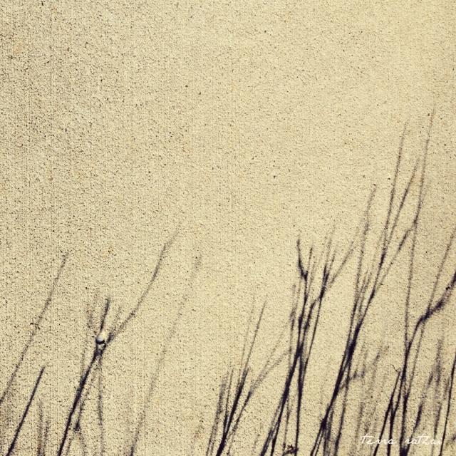 online_020817-grass-shadows-sidewalk