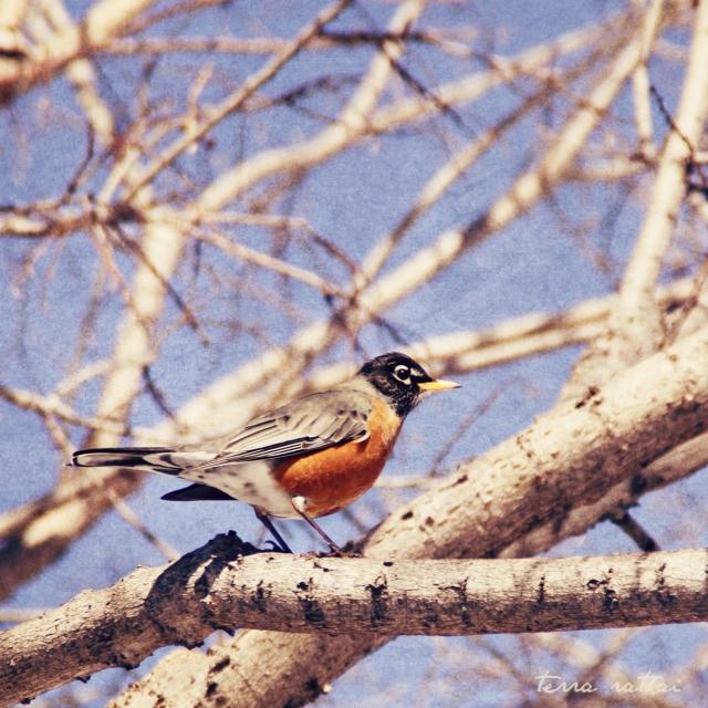 online-1st-robin-spring-2017