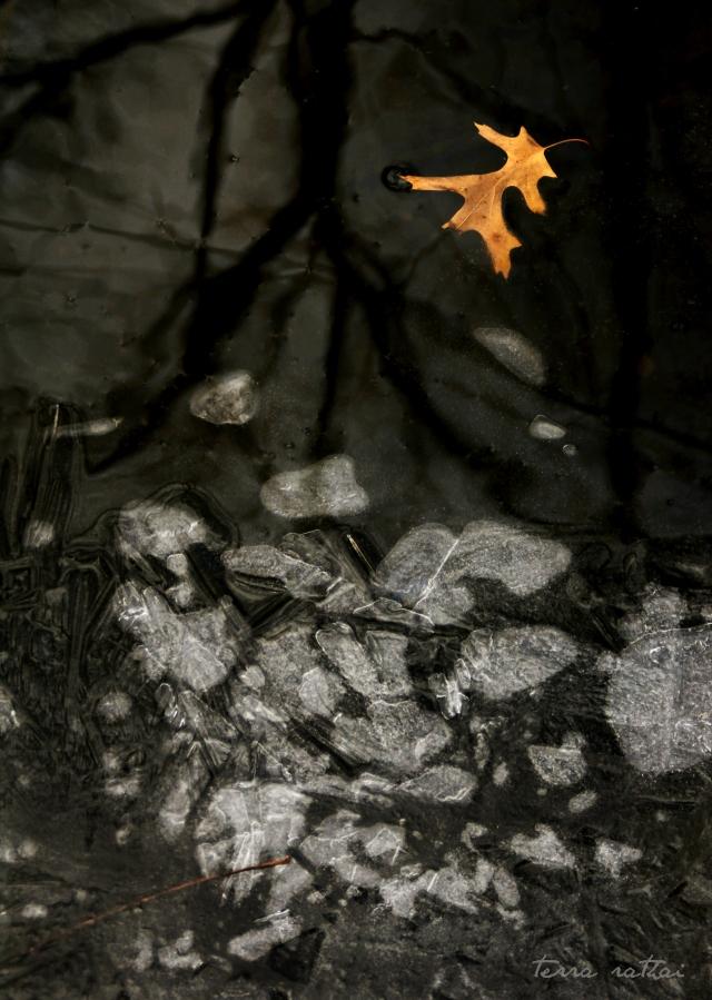 online022517_black-water-ice-leaf