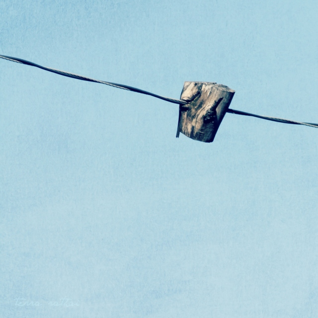 online022617_tree-on-wire