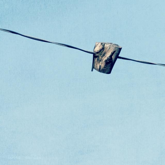 online022617_tree-on-wire