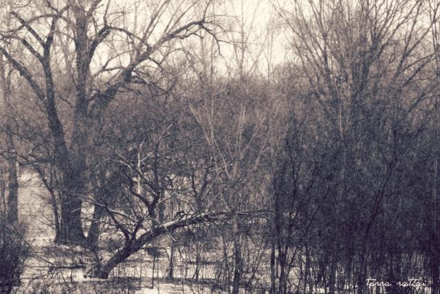 online031217_snowy-day-02